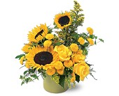 A Pot of Sunflowers in Manalapan NJ, Rosie Posies