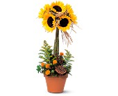 Sunflower Topiary in Charlotte NC, Starclaire House Of Flowers Florist