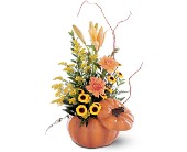 Pumpkin Delight in Cornwall ON, Blooms