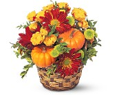 Hint of Fall in Orange VA, Lacy's Florist