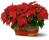 Double Poinsettia Basket in Norwalk CT, Bruce's Flowers & Greenhouses