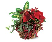 Holiday Planter Basket in Burien WA, Iris & Peony