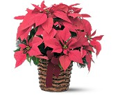 Poinsettia Basket in San Clemente CA, Beach City Florist