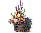 Basket of Glory in Charlotte NC, Starclaire House Of Flowers Florist
