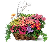 Deluxe European Garden Basket in Bismarck, North Dakota, Dutch Mill Florist, Inc.