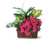 Azalea Attraction Garden Basket in Houston TX, Bokay Florist