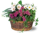 Traditional European Garden Basket in East Syracuse NY, Whistlestop Florist Inc