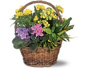 Petite European Basket in Carol Stream IL, Fresh & Silk Flowers