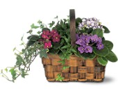 Mixed African Violet Basket in Eugene OR, Rhythm & Blooms
