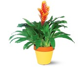 Exotic Bromeliad in San Clemente CA, Beach City Florist