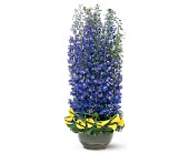 Distinguished Delphinium in Nationwide MI, Wesley Berry Florist, Inc.