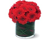 Red Gerbera Collection in Manalapan NJ, Rosie Posies