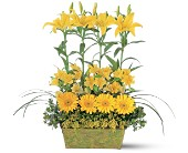 Yellow Garden Rows in Wethersfield CT, Gordon Bonetti Florist