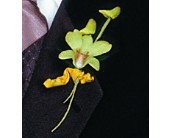 Cat's-Eye Green Orchid Boutonniere in Branford, Connecticut, Myers Flower Shop