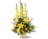 Ray of Hope Arrangement in Holmdel NJ, Holmdel Village Florist