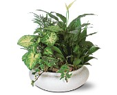 Green Garden Bowl in Jamestown NY, Girton's Flowers & Gifts, Inc.