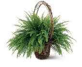 Faithful Fern in Nationwide MI, Wesley Berry Florist, Inc.