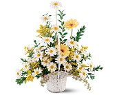 Drop of Sunshine Basket in Marysville CA, The Country Florist