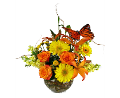 Sunshine & Butterflies in Indianapolis IN, McNamara Florist