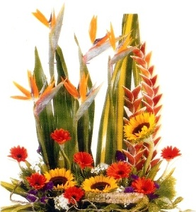Designer's Choice Contemporary Arrangement in Burlington NJ, Stein Your Florist