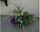12 Inch Planter in Northfield MN, Forget-Me-Not Florist