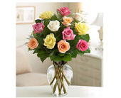 Sale! Buy 12 Long Stem Mixed Roses Get 6 FREE! in Baltimore MD, Raimondi's Flowers & Fruit Baskets