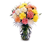 Sale! Buy 12 Colorful Carnations Get 6 FREE! in Baltimore MD, Raimondi's Flowers & Fruit Baskets