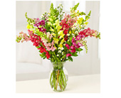 Sale! Buy 12 Sensational Snaps, Get 6 FREE! in Baltimore MD, Raimondi's Flowers & Fruit Baskets
