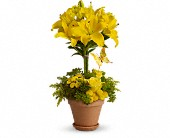 Yellow Fellow in Norwich NY, Pires Flower Basket, Inc.