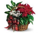Cataula Flowers - Holiday Homecoming Basket - Flower Cart