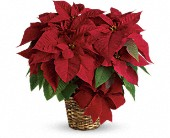 San Leandro Flowers - Red Poinsettia - Floral Accent and Gift Baskets
