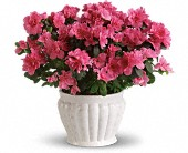 Pretty in Pink Azalea in Columbus IN, Fisher's Flower Basket