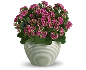 Bountiful Kalanchoe in Dublin OH, Red Blossom Flowers & Gifts