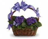 Des Plaines Flowers - Violets And Butterflies - Nancy Sell's Flowers