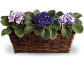 Sweet Violet Trio in Mount Morris MI, June's Floral Company & Fruit Bouquets