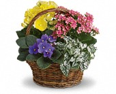 Spring Has Sprung Mixed Basket in Dublin OH, Red Blossom Flowers & Gifts