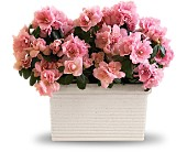 Sweet Azalea Delight in Bluffton IN, Posy Pot