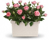 Rose Repose in Perth ON, Kellys Flowers & Gift Boutique