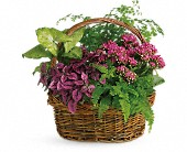 Secret Garden Basket in Carol Stream IL, Fresh & Silk Flowers
