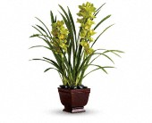 Teleflora's Splendid Orchids in Brooklyn NY, Beachview Florist