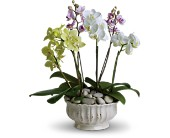 Regal Orchids in Mount Morris MI, June's Floral Company & Fruit Bouquets