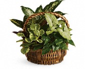 Emerald Garden Basket in Beaumont TX, Blooms by Claybar Floral