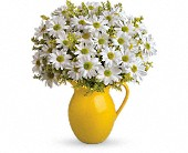 Teleflora's Sunny Day Pitcher of Daisies in The Woodlands TX, Botanical Flowers and Gifts