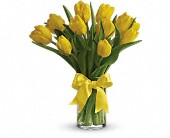 St. Louis Flowers - Sunny Yellow Tulips - Bloomers Florist &amp; Gifts