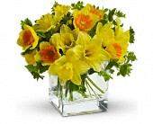 Teleflora's Daffodil Dreams in Edmonton AB, Petals For Less Ltd.