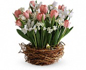 Tulip Song in Morgantown WV, Galloway's Florist, Gift, & Furnishings, LLC
