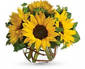 Sunny Sunflowers in Taylorville IL, A Classic Bouquet