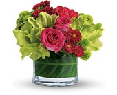 Teleflora's Beauty Secret in Waterloo ON, I. C. Flowers 800-465-1840