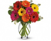 Calgary Flowers - Teleflora's Gerbera Brights - Tree House Flower Shop