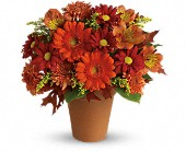 Newalla Flowers - Golden Glow - Choctaw Florist Plants & Gifts